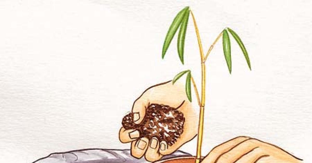 Bambus Vermehren Garten Garten Pflanzen Pflanzen Und Garten