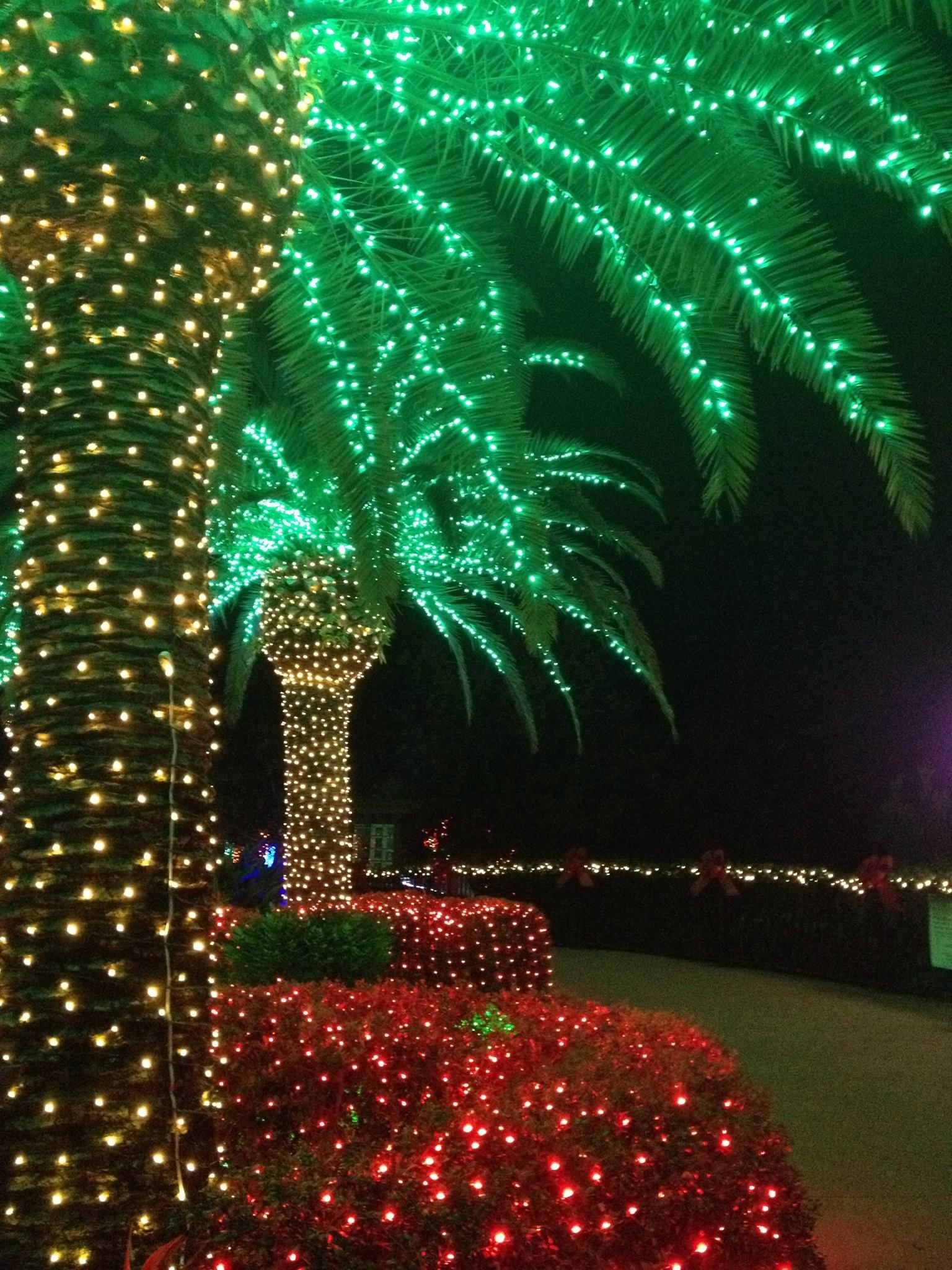 the way lights were supposed to be used on palm trees