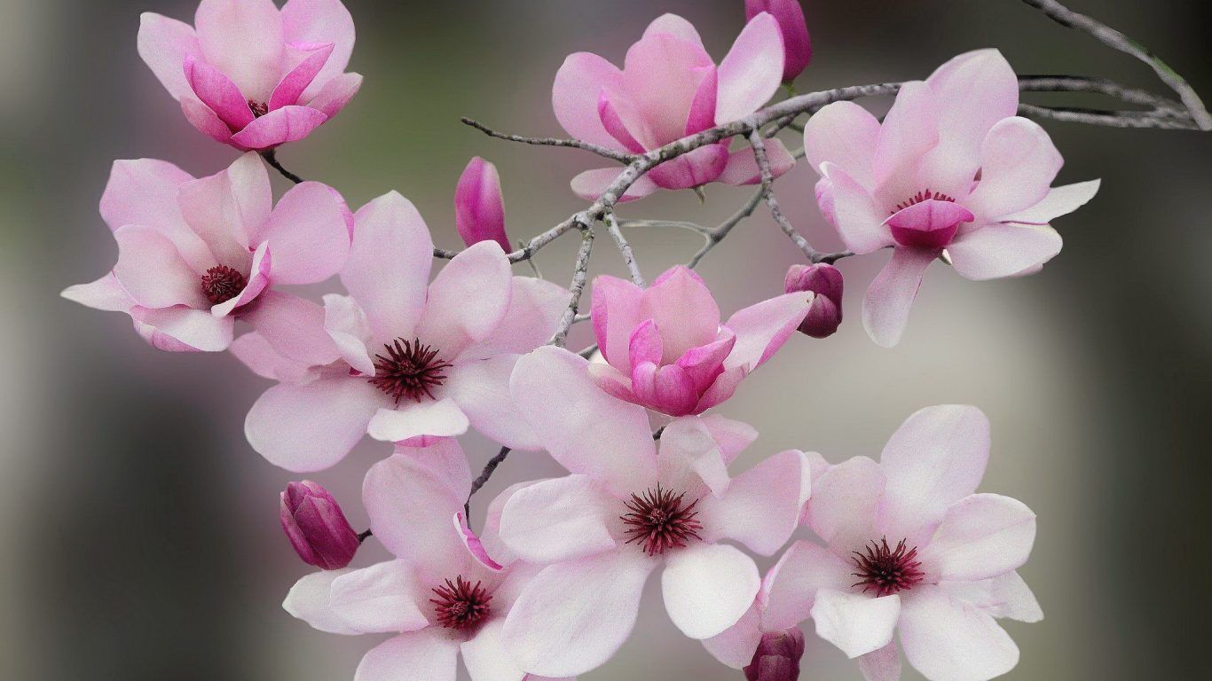 Flowering Blossoms Tree Flower Scent Lovely Beautiful Blooming