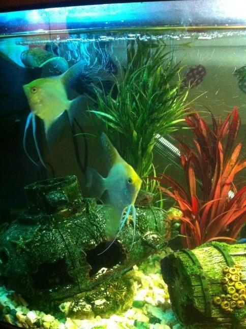 Dave's aquarium