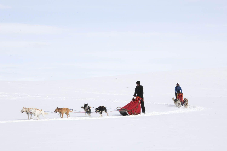 Dog sledding day or night - tromso 1300 NOK
