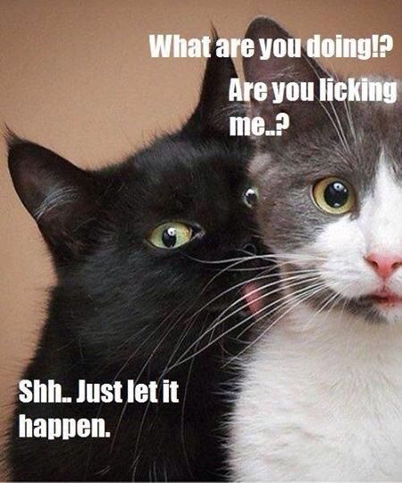 Just Go With It Meme : Bottled, Cat's, Animal, Captions,, Funny, Pictures,, Behavior