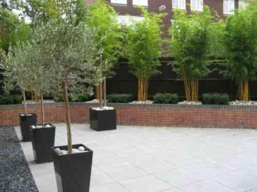 Planter des bambous dans son jardin - quelle bonne idée ...