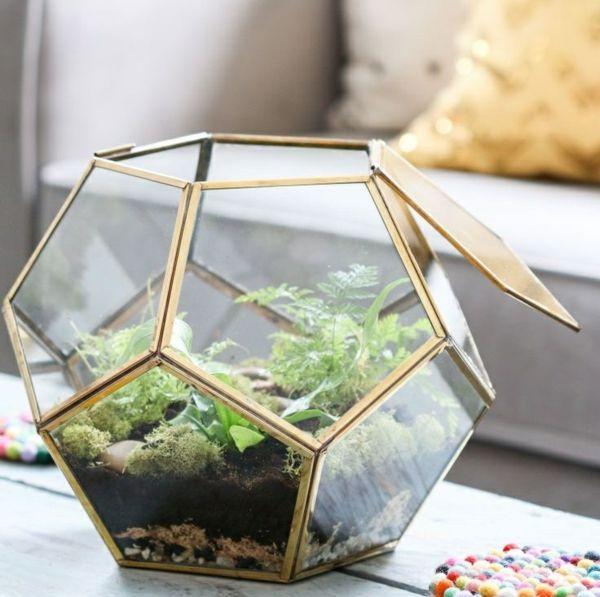 wie baue ich ein terrarium pflanzen und passende glasgef e green thumb pinterest. Black Bedroom Furniture Sets. Home Design Ideas