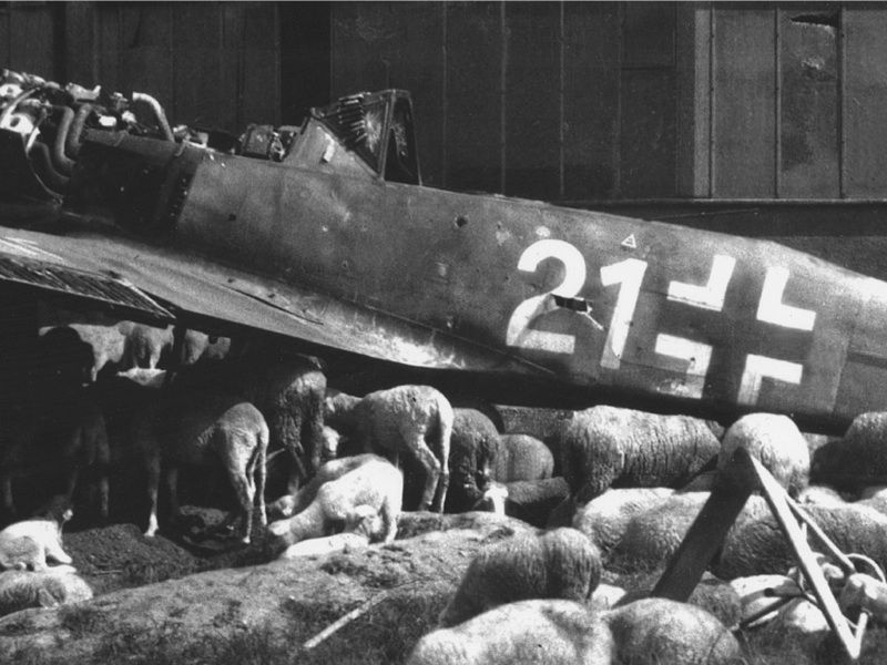 May 1945: A Luftwaffe hangar in Leipzig - along with a quarter of the city where, two centuries ago, Johann Sebastian Bach had composed the greatest cantatas of the Baroque era - lay flattened by Allied bombers. But fighting had stopped. The Third Reich had fallen 988 years short of its millennial vow. Sheep cared not of war and peace. Life resumed.