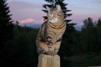 Love this one!  I Am Cat Grisha And This Is My Post