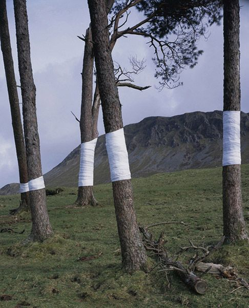 'This is an ongoing series of constructed photographs rooted in the forest. These works, carried out in Surrey, Hampshire and Wales,involve site specific interventions in the landscape, 'wrapping' trees with white material to construct a visual relationship between tree, not-tree and the line of horizon according to the camera's viewpoint.'