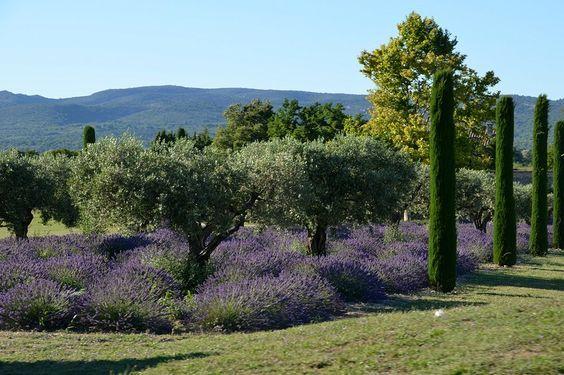 Jardin Provence Provence Garden Mediterranean Garden Hillside