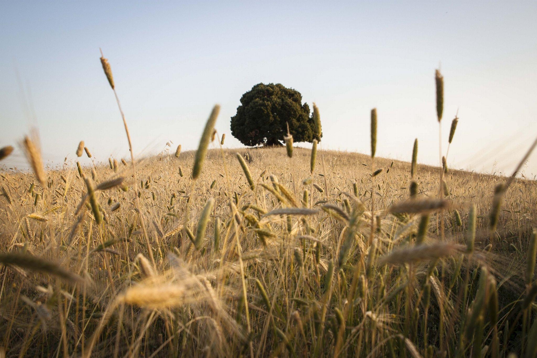 Crete senesi by Cesare Simioni on 500px