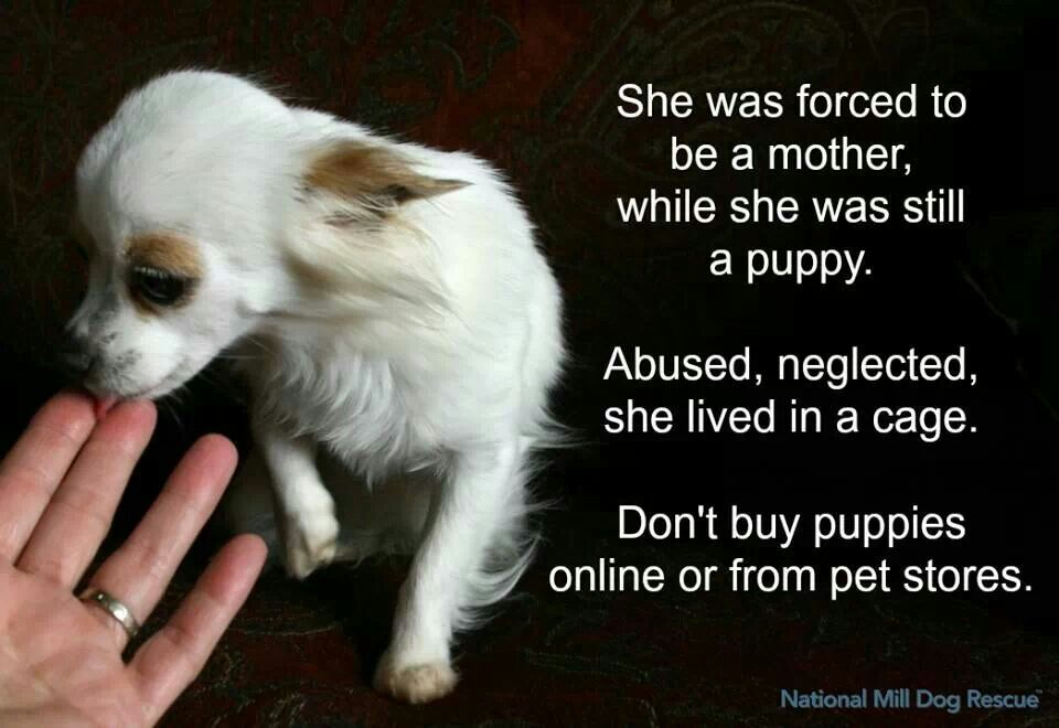 Adopt Don T Shop Don T Be A Selfish Human Being Puppies Buy Puppies Dogs