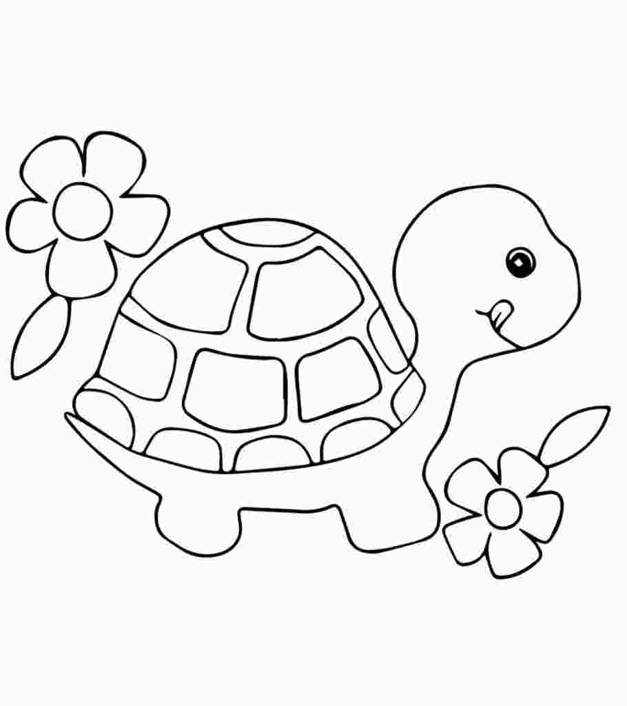 Pin On Lifecycle Of A Turtle