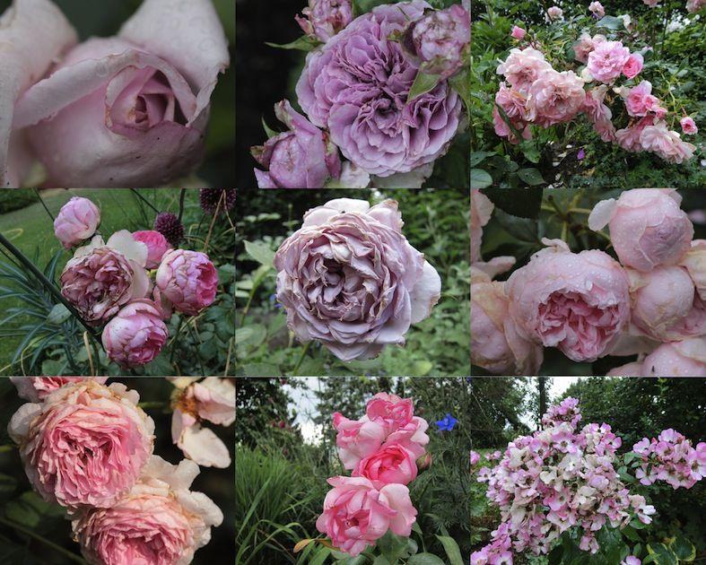 Gartengluck Im Wandelgarten Rosenschonheit Eine Ansichtssache Garden Art Green Inspiration Love Rose