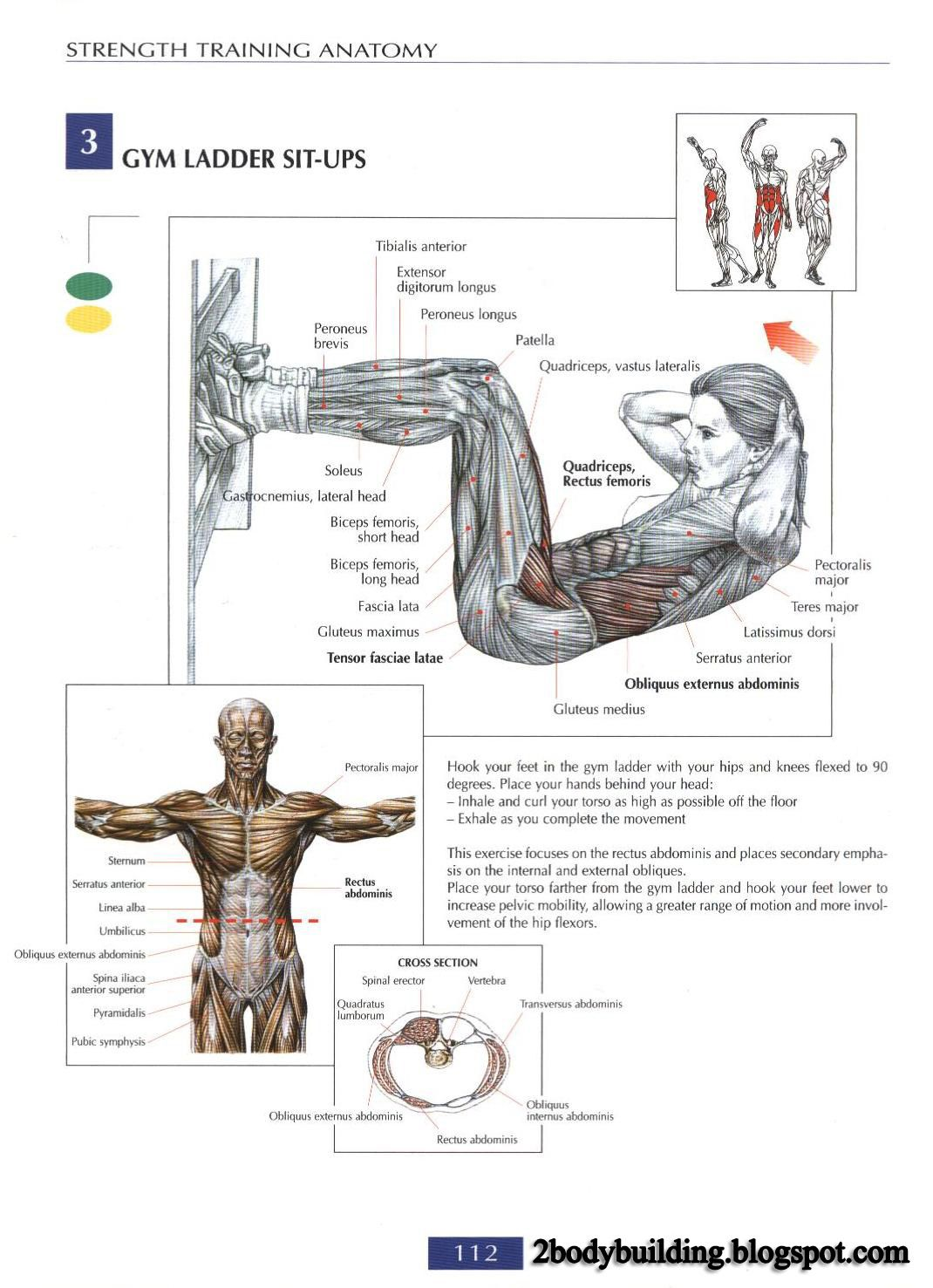 Pin by Pierre Khoury on Abdominal | Pinterest