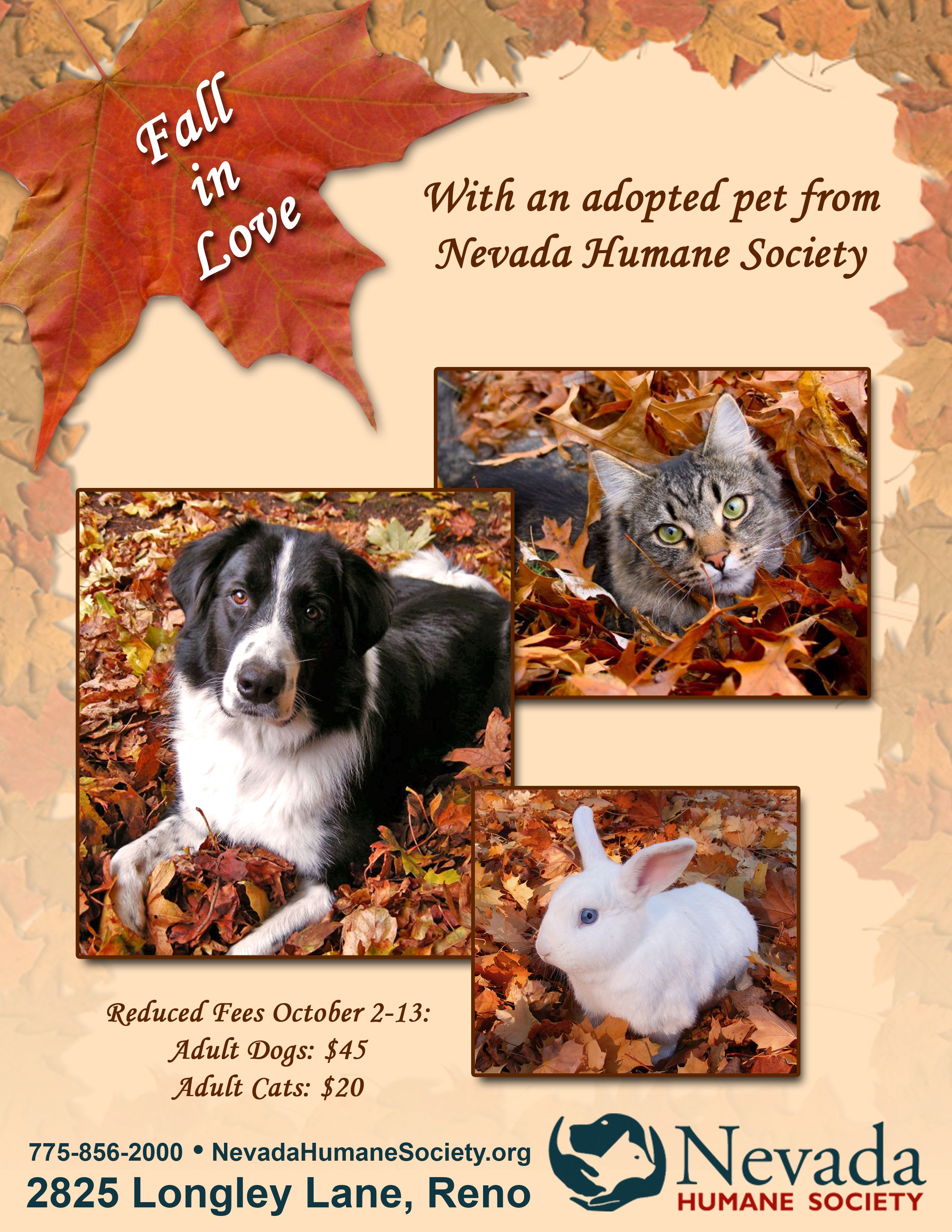 Fall In Love With A Homeless Pet From Nevada Humane Society Pets Homeless Pets Adult Dogs