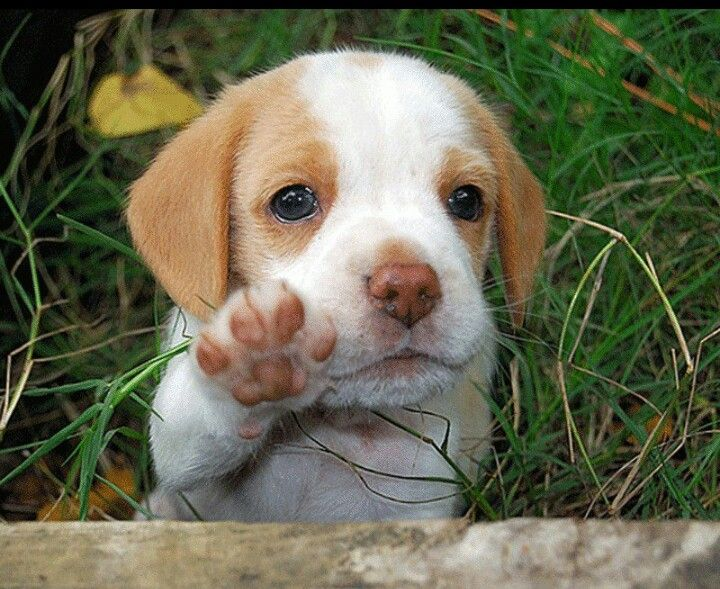 Puppy Waves Bye Bye Cute Animals Cute Puppies Cute Dogs
