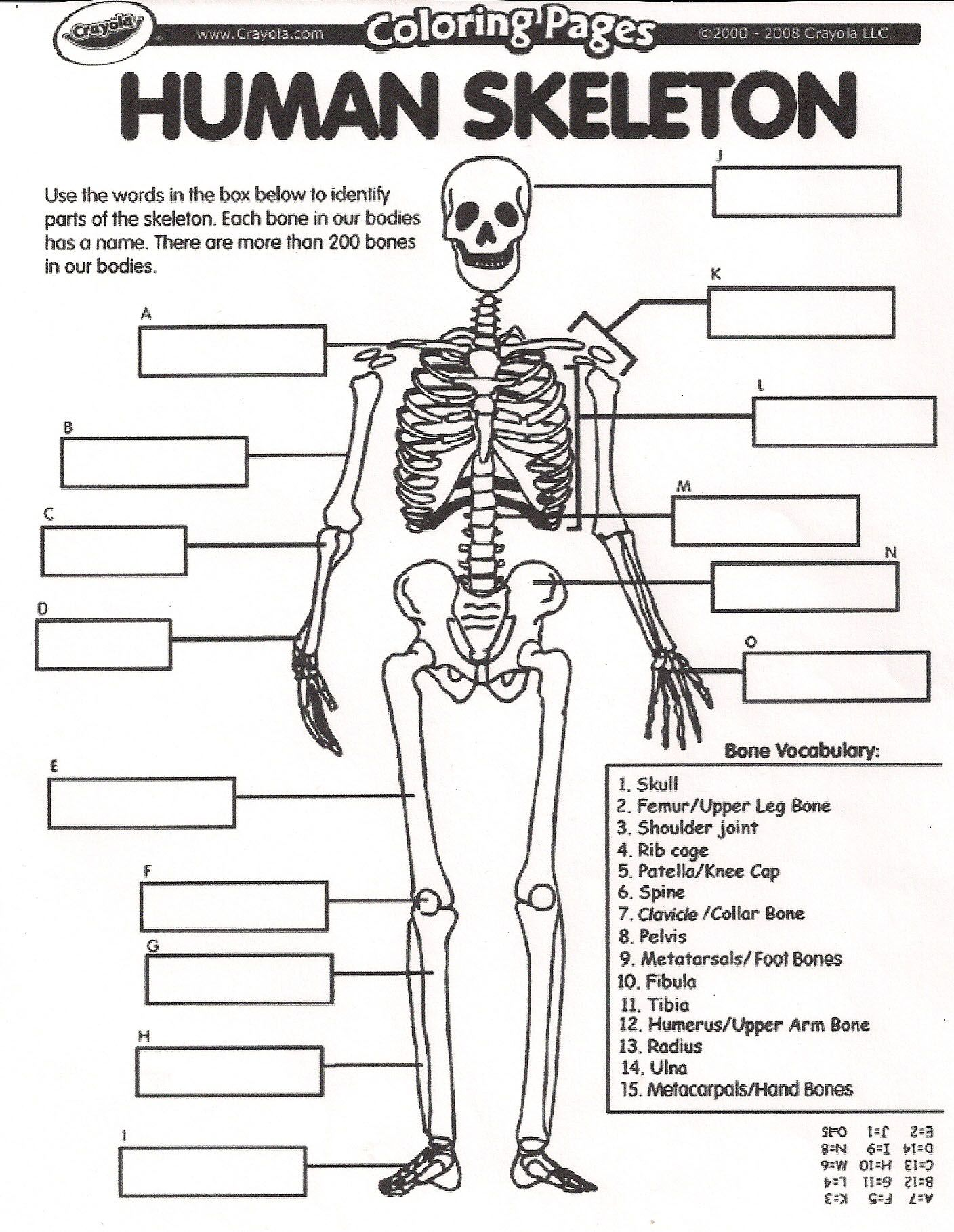 collection of human skeletal system worksheets bloggakuten - Skeletal System Worksheet