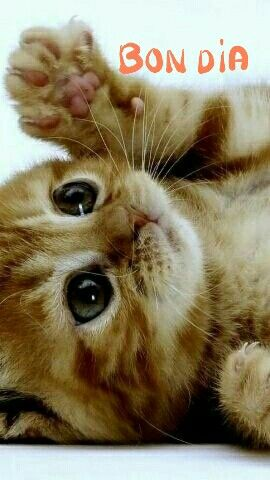 Imagen sobre Gatos bonitos de Maite Martin Pedruelo en bon