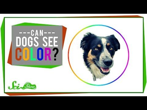 Dogs Actually Can See In Color, But Do You Know Which Ones? - BarkPost