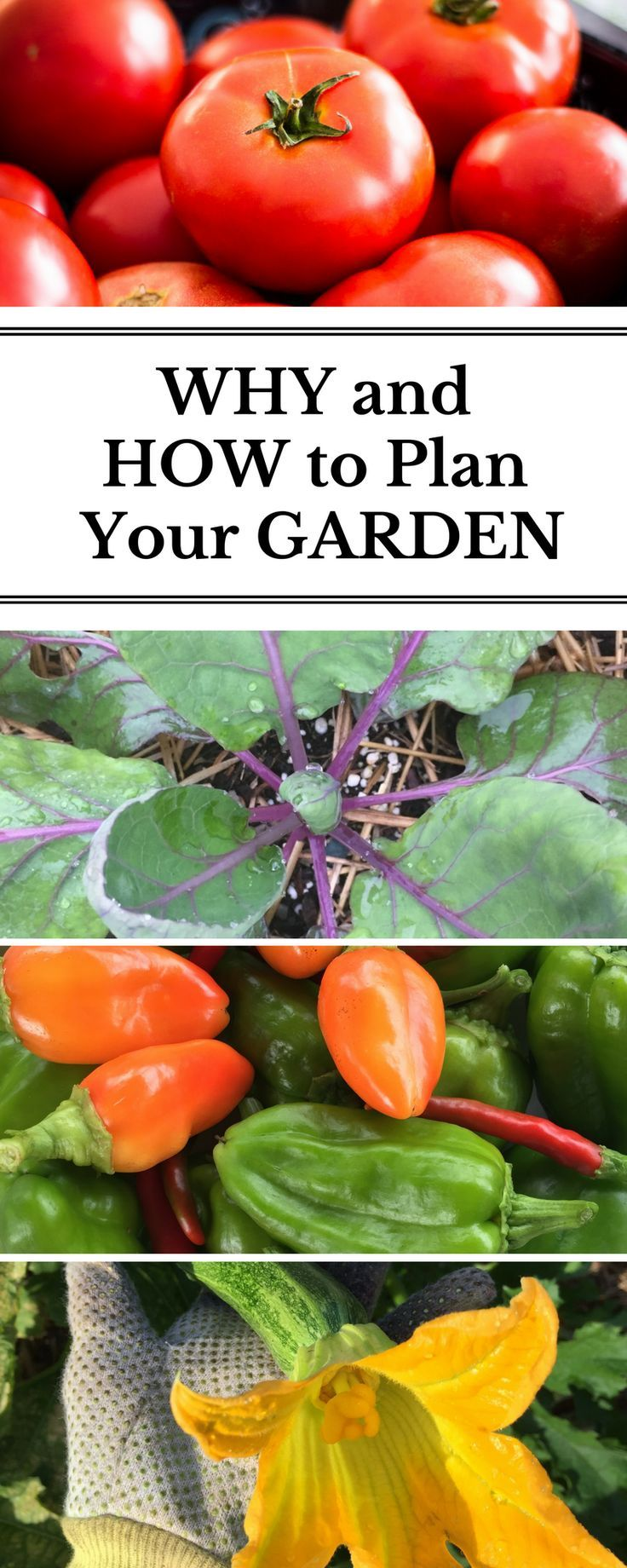 Why and How to Garden Map | Backyard vegetable gardens ...