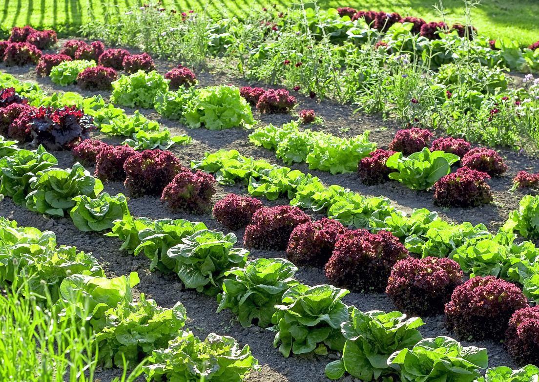 Pienikin maakaistale antaa satoa ja onnistumisen iloa. Ruukut, laatikot ja seinäpuutarhat tuovat lisää viljelytilaa. Katso vinkit ja poimi parhaat ideat omaan puutarhaan!