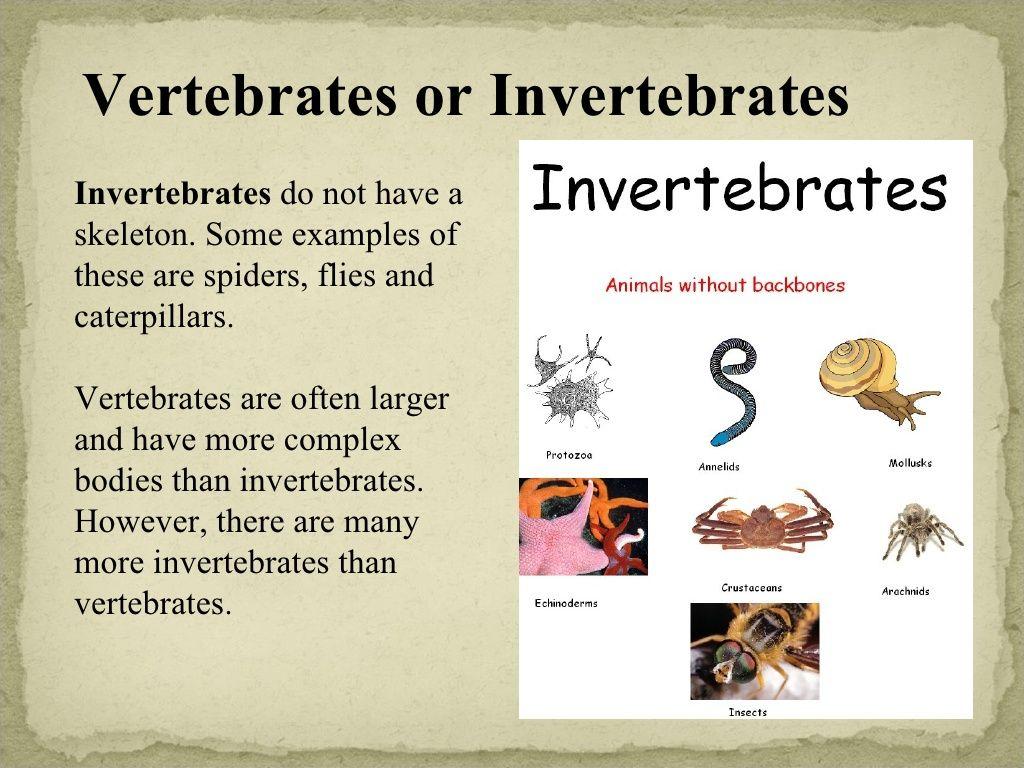 vertebrates and invertebrates vertebrates invertebrates. Black Bedroom Furniture Sets. Home Design Ideas