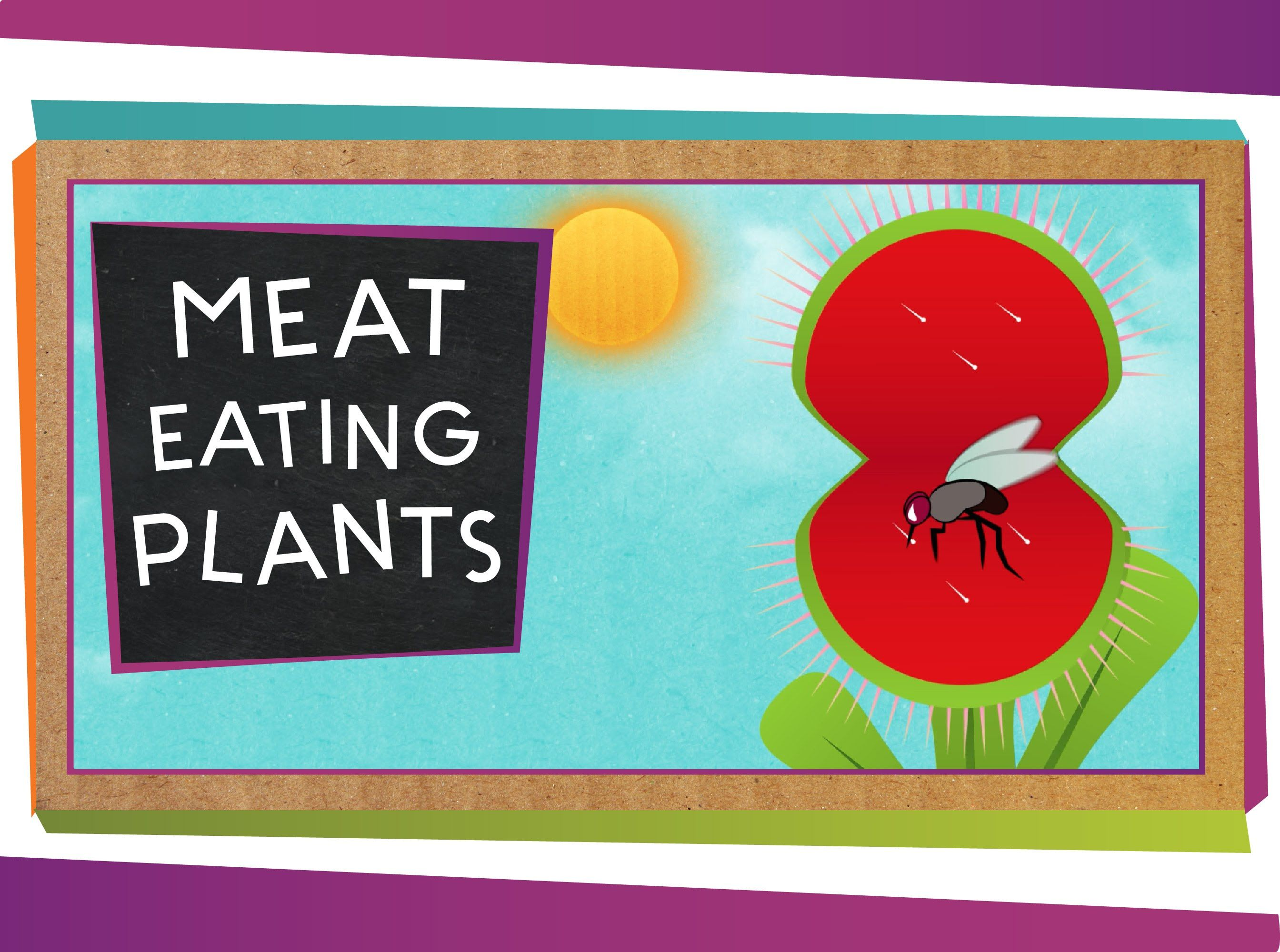 Many Animals Eat Plants But Did You Know Some Plants Eat