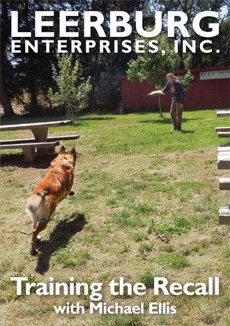 Training The Recall With Michael Ellis Aggressive Dog Agility