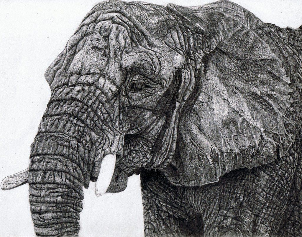 how to draw realistic birds step by step - Google Search ... Realistic Elephant Drawing