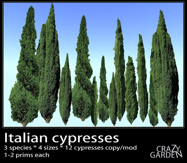 Tuscan House Style With Front Walkway And Italian Cypress: Italian Cypress - Google Search