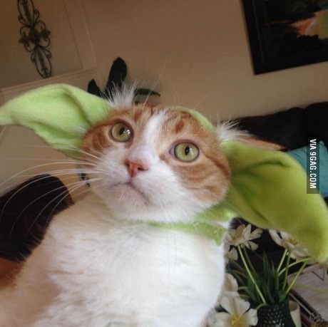 may the fourth be with you she said sports food funny pics and cat