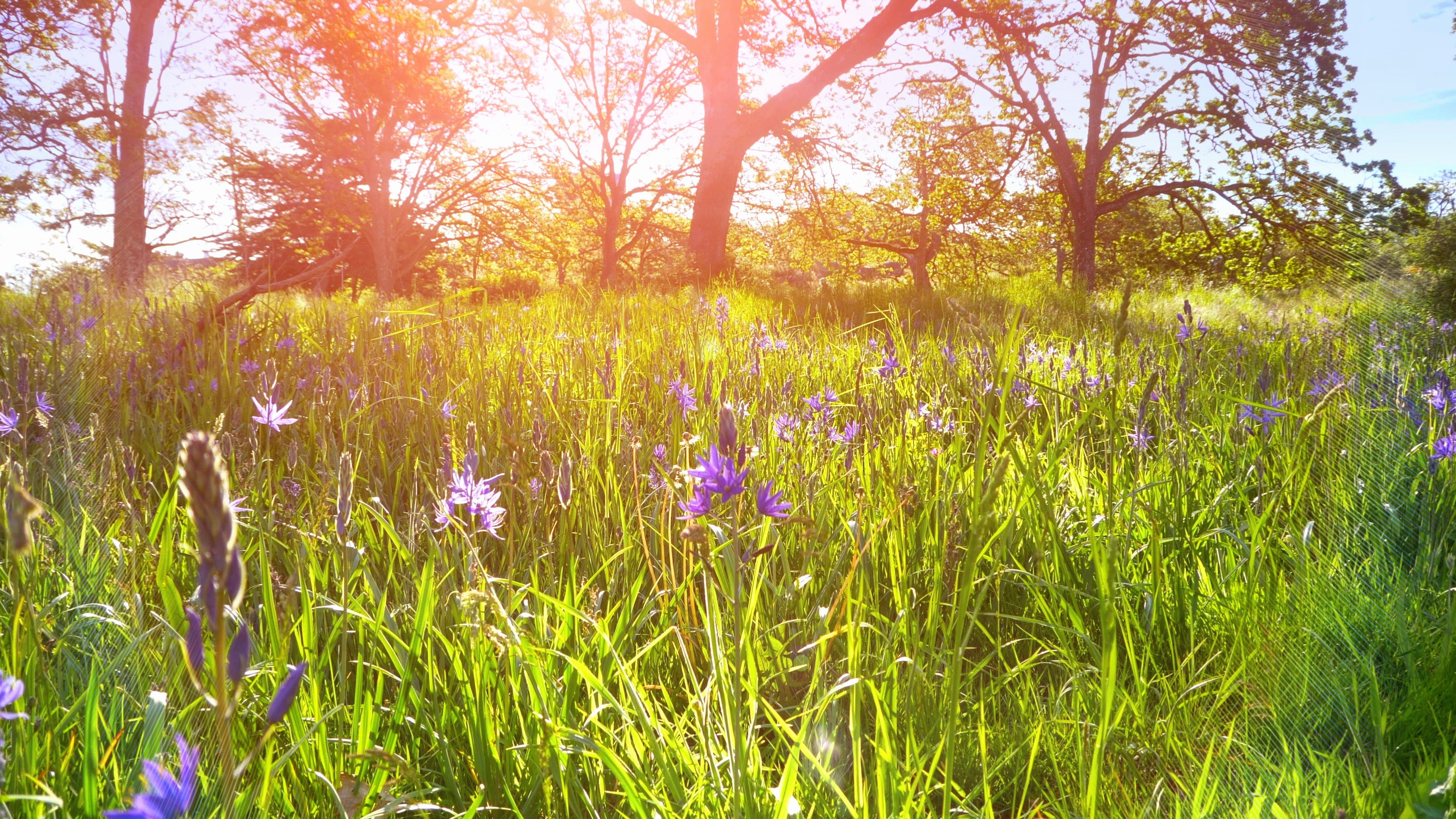 Beautiful Spring Flowers Meadow Landscape Background Nature Field Sun Sky Grass Stock Footage Meadow Landscape Back Landscape Background Spring Flowers Nature