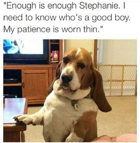 Who S A Good Boy Funny Animals Funny Animal Pictures Funny Dogs