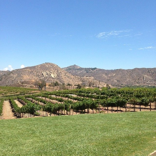 Enjoying the afternoon in San Diego Wine Country.