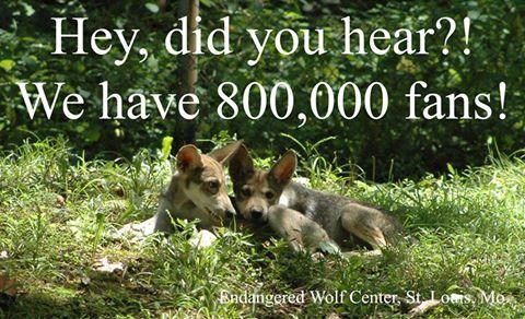 Endangered Wolf Center's photo.