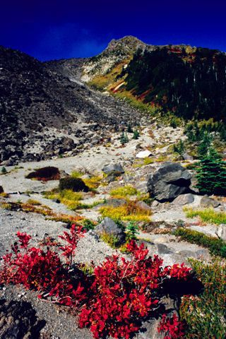 Skamania County Chamber of Commerce : Favorite Trips