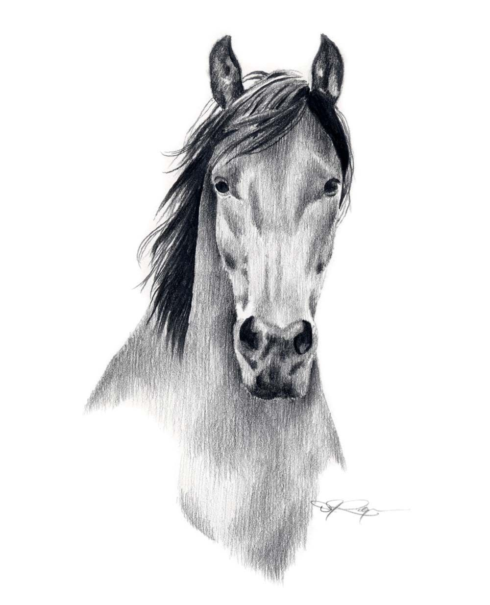Pencil Drawing Horse Picture Pencildrawing2019