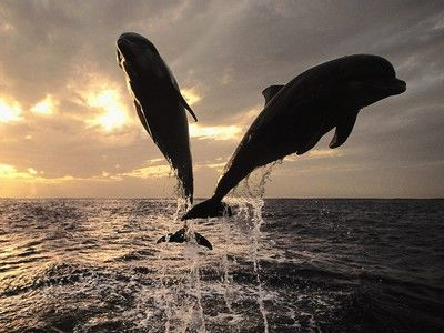 10 Reasons Why Dolphins Are Undeniably Awesome.  Great videos!  Have a look.  You're sure to smile.