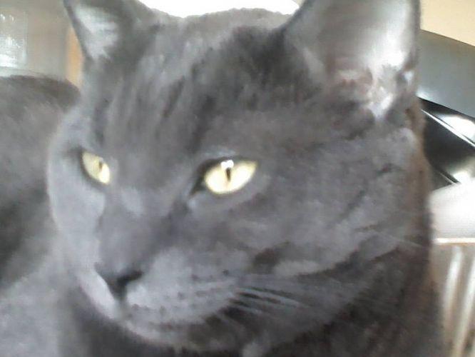 Pin On My Fabio Cat