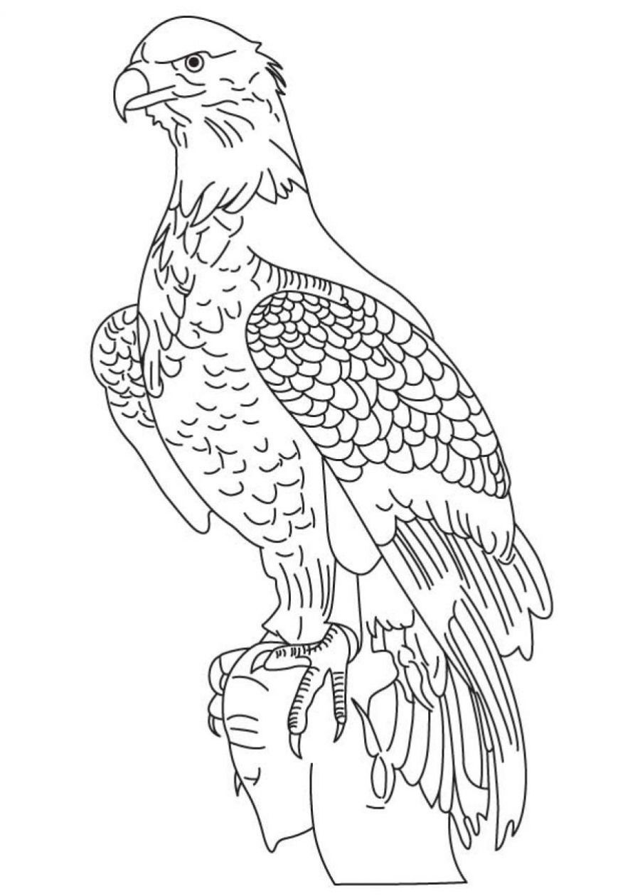 Coloring-Page-of-Bald-Eagle | Eagle Coloring Pages | Pinterest ...