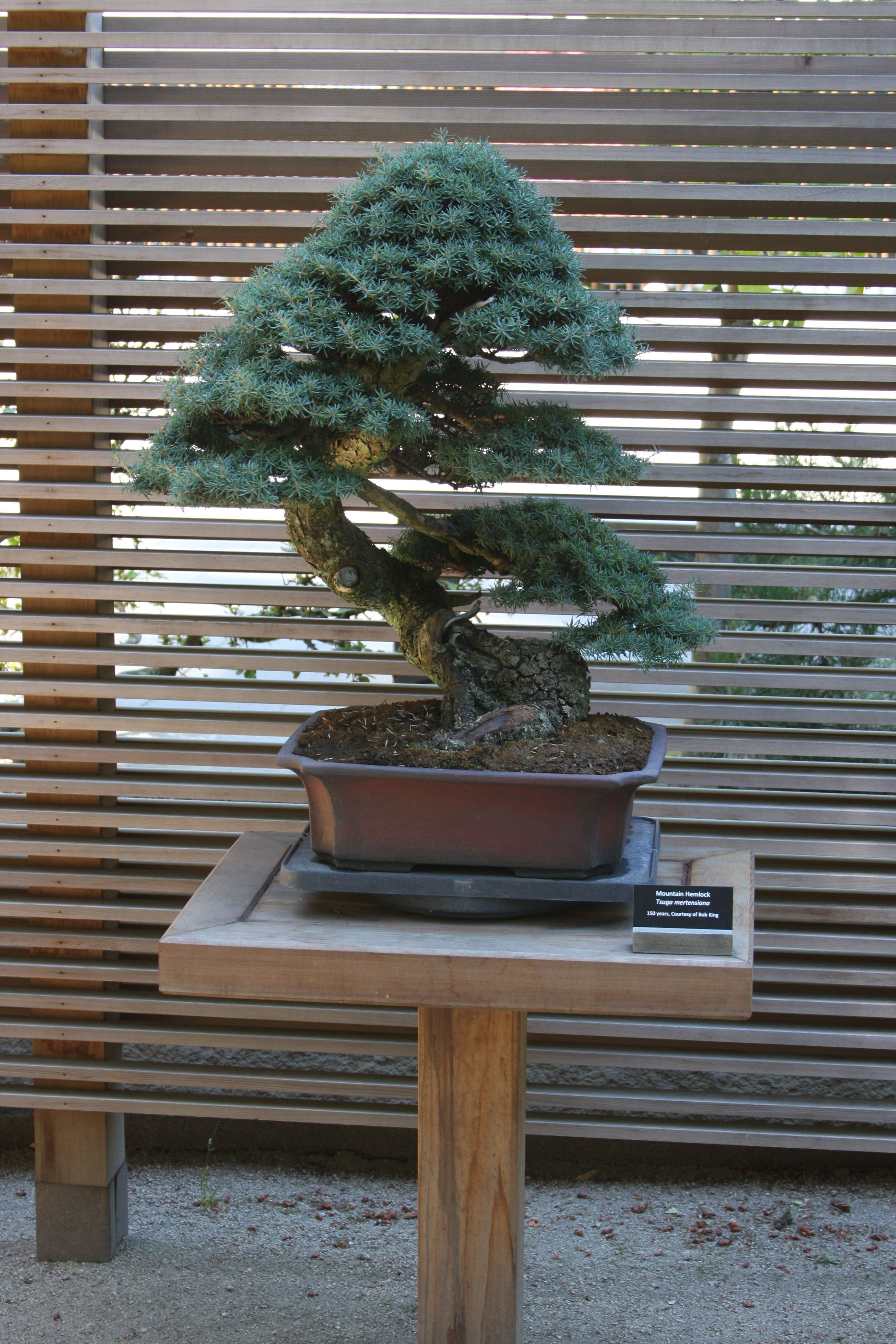 Bonsai Japanese Garden Portland Oregon 07 2018 Japanese Garden Bonsai Tree Bonsai