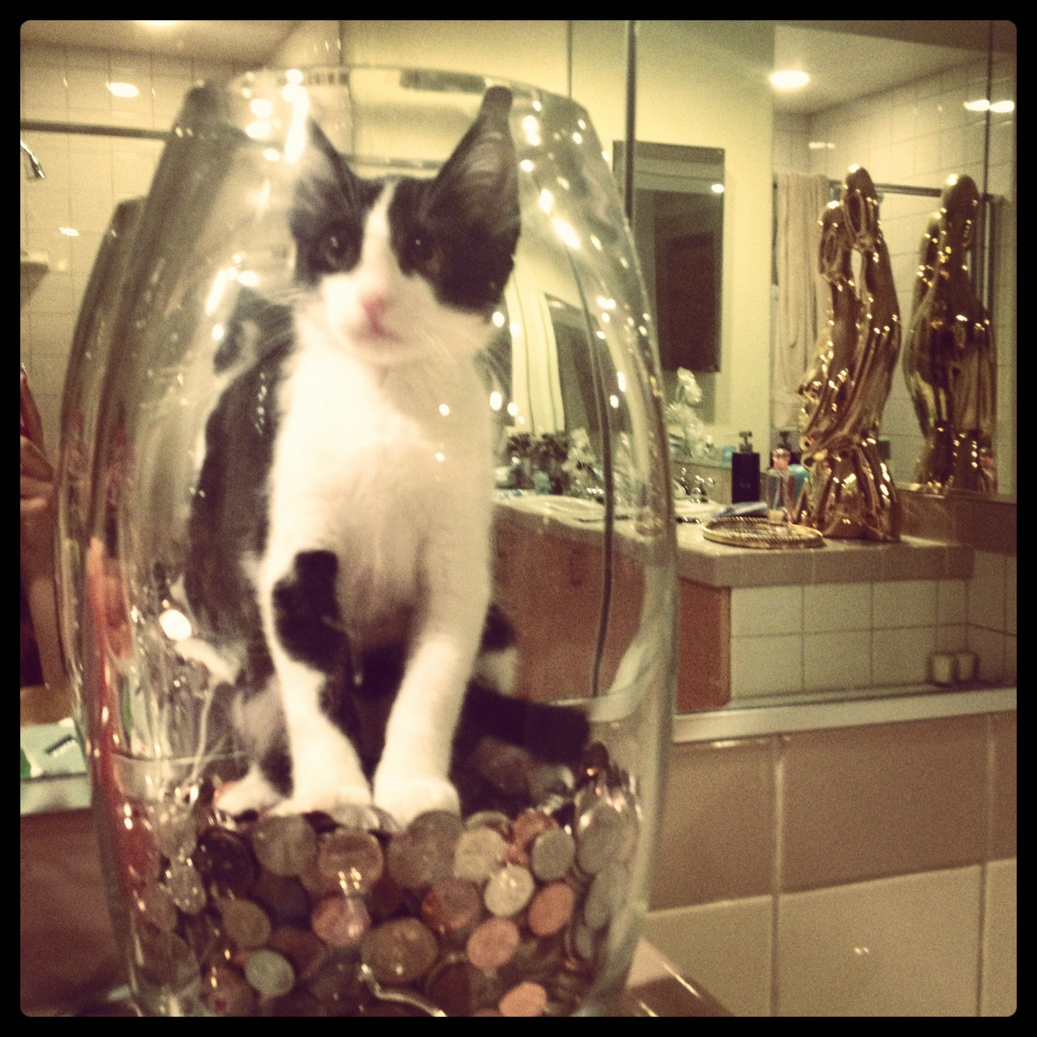 0 0 Cat Stuck in a Jar My Style Me Pinterest Cat and Animal