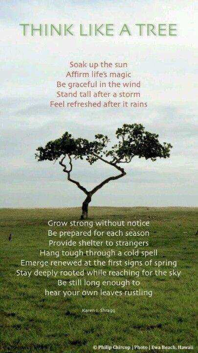 Think like a tree... Tree quotes