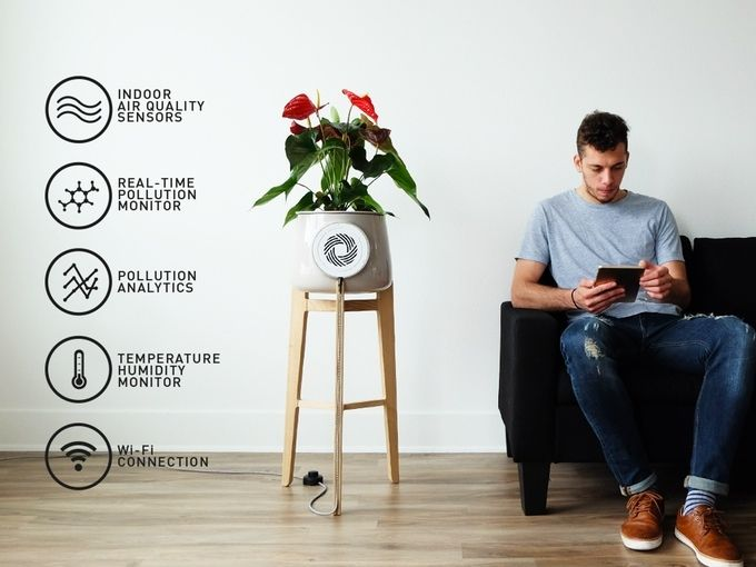 Clairy: The Most Amazing Natural Air Purifier | Indiegogo | Indiegogo