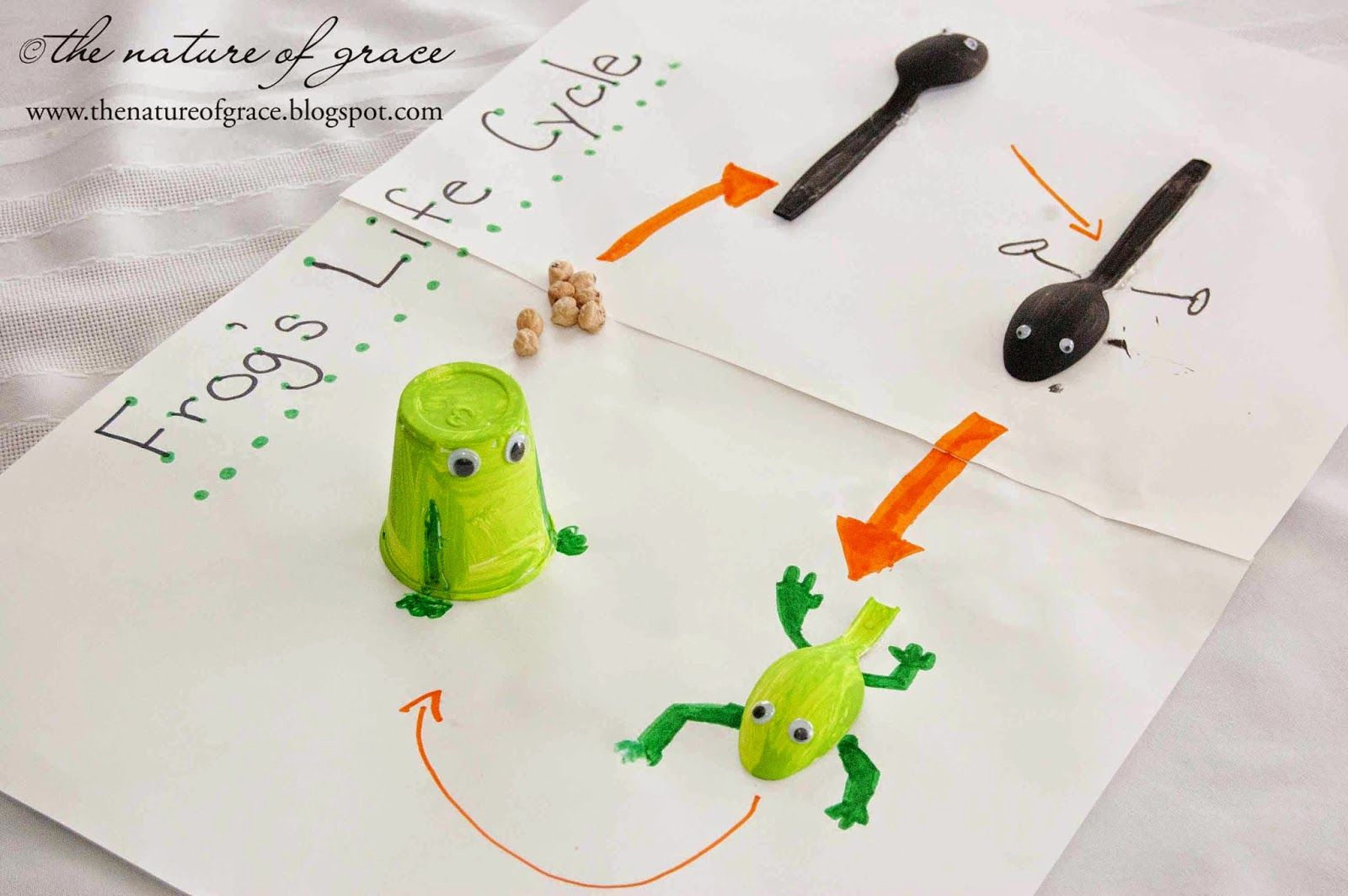 Frog S Life Cycle Recycled