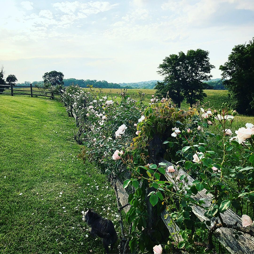 on point farm outdoor beach vineyard on extraordinary garden path and walkway design ideas and remodel two main keys id=95553