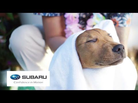 Dogs Visit A Spa For The First Time Presented By Buzzfeed Subaru Youtube I Thought This Would Entertain You Jordiee Bubblepop86 With Images Dog Spa Dogs Subaru