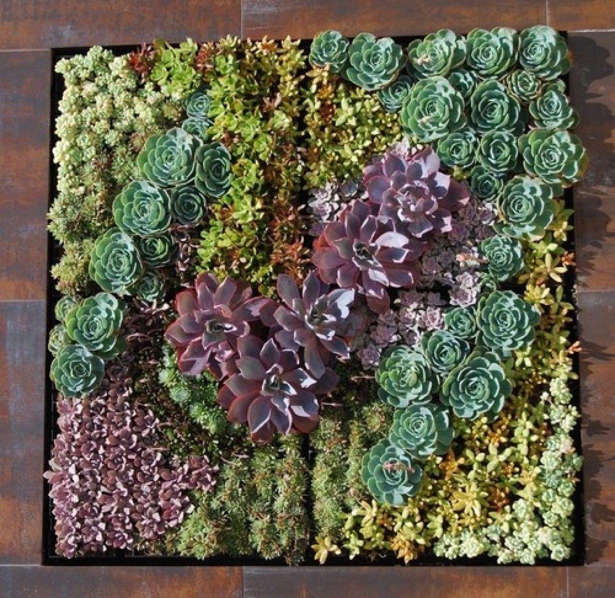 Cómo decorar con nuestra colección de suculentas flowers and gardens