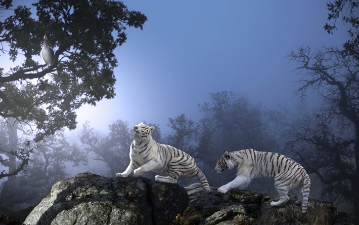 Download Wallpapers White Tigers Predators Wildlife Night Forest Thailand Besthqwallpapers Com Animals Beautiful Animals White Tiger