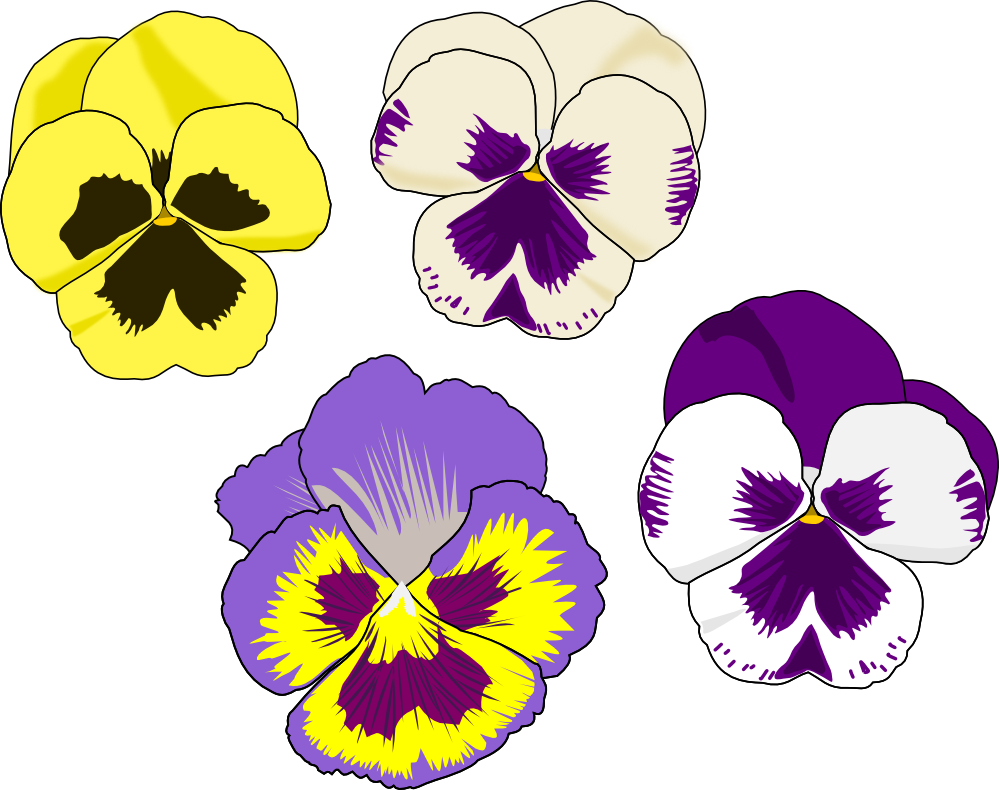 pansey black personals Purple pansies checks - the pansy has always had a romantic image associated with it in fact, the very name translates as.