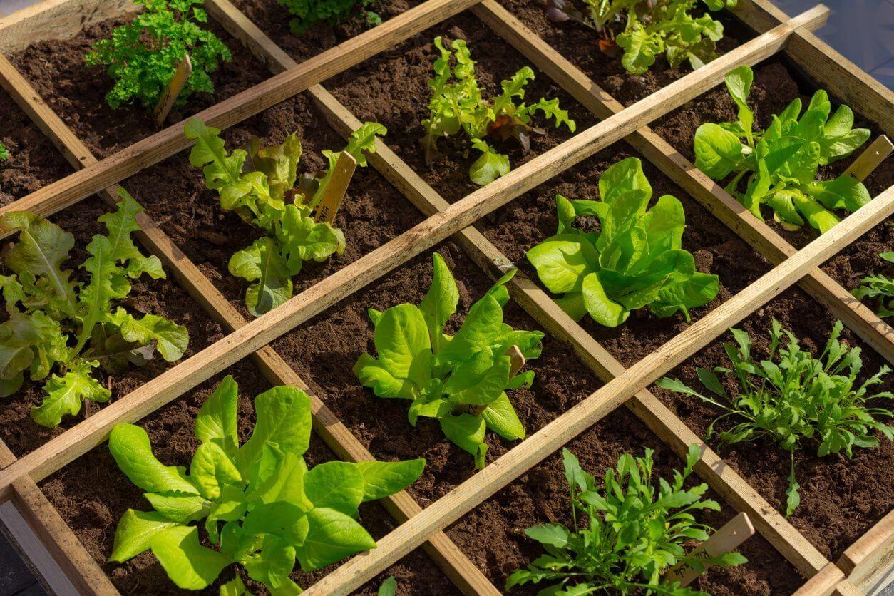 Top 3 Raised Garden Bed Designs in 2020 Organic raised